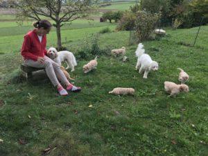 101-labradoodle-welpen-zucht-hundezucht-schweiz-barf-familienhund-allergikerhund