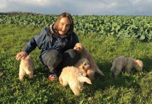30-labradoodle-welpen-zucht-hundezucht-schweiz-barf-familienhund-allergikerhund