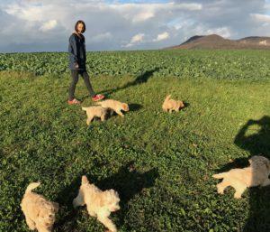 43-labradoodle-welpen-zucht-hundezucht-schweiz-barf-familienhund-allergikerhund