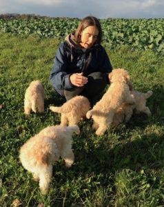 58-labradoodle-welpen-zucht-hundezucht-schweiz-barf-familienhund-allergikerhund