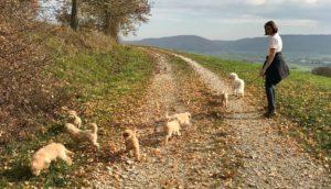 78-labradoodle-welpen-zucht-hundezucht-schweiz-barf-familienhund-allergikerhund